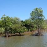 startbild_mangroven_7a001